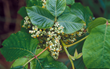Common Myths About Poison Oak, Poison Ivy and Poison Sumac:  WSSA...