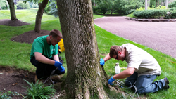 Emerald Ash Borer is 100% Fatal.   Giroud PA Certified Technicians, Matt Giroud and Rodney Stahl, Jr., prepare to treat an Ash tree for Emerald Ash Borer.