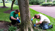 Emerald Ash Borer is a threat to All Ash Trees in the Philadelphia...
