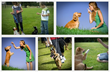 Kingdom Of Pets Review Introduces How To Train A Puppy Quickly –...
