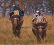 Elephant back rides in the Bardia Tiger Reserve - Nepal