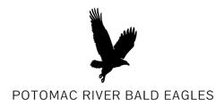 bald eagle photos
