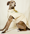 Pronto from YAP USA Inc is modeling a doggy bathrobe