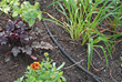 Becoming a Waterwise Gardener Has Its Benefits