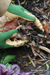 Mulch conserves moisture, suppresses weeds, and keeps plant roots cool.