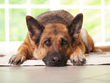Is Your Pet's Illness and Isolated Incident or a Chronic...