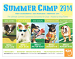 Wag Hotels Hosts Summer Camp Exclusively for Dogs