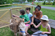 Campers enjoy brushing the donkey and feeding the new baby goat at Camp Loyaltown's  Alfred Z. Solomon Nature Center.