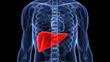 fatty liver bible & ezra protocol review
