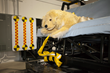 Center for Pet Safety Crash Test Dog