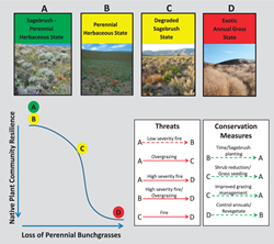 Conceptual ecological framework for managing sage-grouse habitat using a generalized state-and-transition model for low-elevation sagebrush plant communities in southeastern Oregon