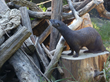 Wyatt, River Otter, at Oakland Zoo