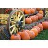 An Image of a wagon with pumpkins