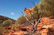 Kalbarri National Park in Western Australia