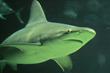 Dive into Shark Week at the South Carolina Aquarium