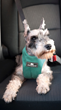 A special edition Clickit Sport dog safety harness in Robin Egg blue is available for a limited time.