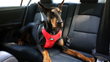 Visually intuitive, Sleepypod's new Clickit Sport dog safety harness is packed with state of the art technology.