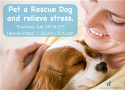 Rescue dogs relieve stress