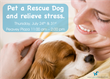 Homeless Dogs as Rescue Remedy to Relieve Stress of Workers in the...