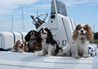 Boating with Cavaliers