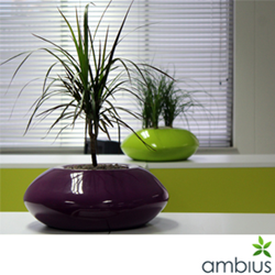Office plant benefits, indoor plants, ambius