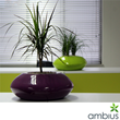 Ambius Stresses the Importance of Plants in the Workplace and whether...