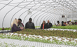 Arthur and Friends to Open New Greenhouse Using American...