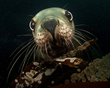 "Underwater Photography Book, ""Luminous Sea"", To Donate 50% of Future..."