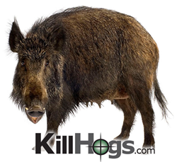 Killhogs.com - Best priced Thermal & Night Vision Scopes for Hog Hunting