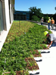 First Green Roof at the University of Iowa