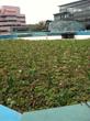 PBDB Green Roof