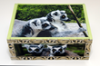 The KeepSafe Project Supports Lemur Conservation Foundation and...