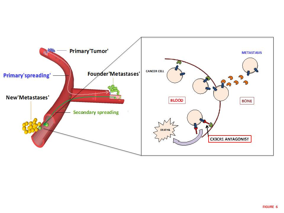a scientific description of the cancer cells progression to infiltrate the lungs Tumor angiogenesis: past, present and the  of event which promote cancer development and progression  instabilities associated with cancer cells.