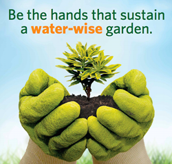 Be the Hands that Sustain a Water-Wise Garden