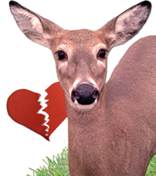 Havahart's nationwide contest seeks out the most poignant Deer John rejection letters delivered to damaging deer.