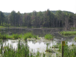 An example of wetlands near Sherburne Falls, MA, that could be impacted by TGP gas pipeline.