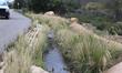 Drivable Grass Bio-swale