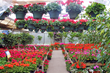 City Floral Garden Center | Garden Services & Greenhouse Serving Denver, CO