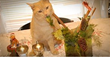 """""""The Beginner's Guide on How to Take Care of Your Cat"""", A New Article on Vinamy.com, Lets Readers Know The Best Reasons To Own A Cat And Taking Care of It – Vinamy.com"""