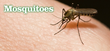 Mosquito Season Is Here – Philadelphia Area Urged to Take Precautions