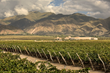 Piattelli Vineyards Expands Argentina Wine Business Into Global Markets