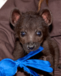 Denver Zoo Welcomes Three Spotted Hyena Cubs to Start New Clan