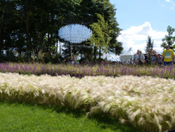 See The Wind Garden