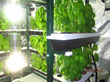 SuperCloset Hydroponics Grows for World Record Vertical Indoor Basil...