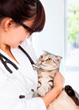 Pets Best Releases List of Most Common Cat Illnesses