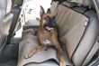 HomeThangs.com Has Introduced A Guide To Pet Car Seat Covers