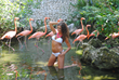 Gioia at Flamingos zone at Xcaret Park