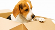 A Los Angeles Moving Company Can Help Clients Move With Their Pets