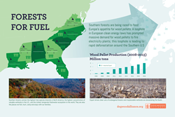 New Infographic Shows How Southern US Forests Are Being Razed to Fuel EU Electricity Demand