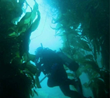 $10,000 BLUE Fellowship Grant Promotes Citizen Science and Ocean...